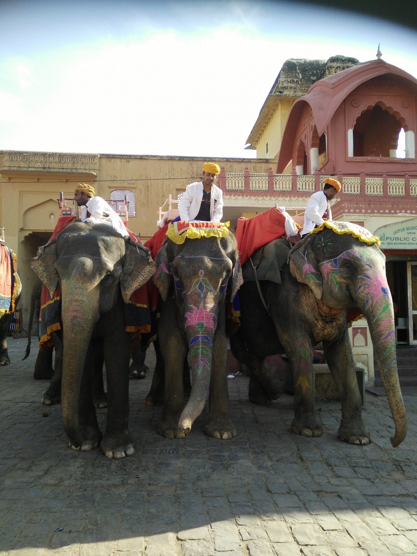 Elephant at Amer Fort