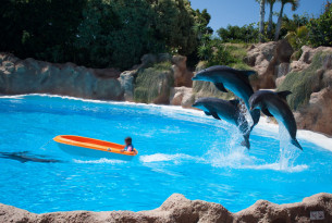5 reasons you should never swim with dolphins on vacation