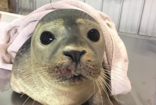 Teaming up with Marine Mammals of Maine to protect local marine mammals