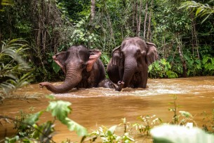 Elephants in water at Kindred Spirit Elephant Sanctuary - World Animal Protection - Animals in the wild