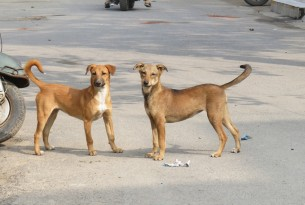 coronavirus, COVID-19, Dogs, animals in communities