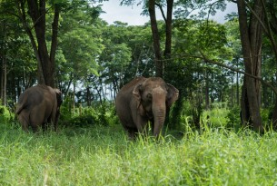 Here's how you can support the first elephant-friendly elephant camp