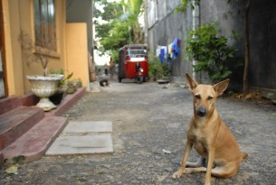 stray dog in Bali