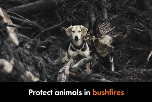 Protect animals in bushfires.