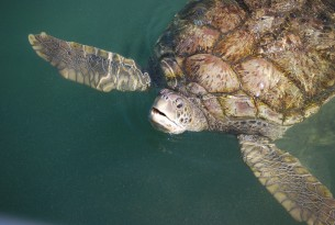 Change urgently needed at Cayman Turtle Farm