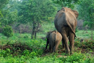 Intelligent and emotional: Elephants should never be ridden