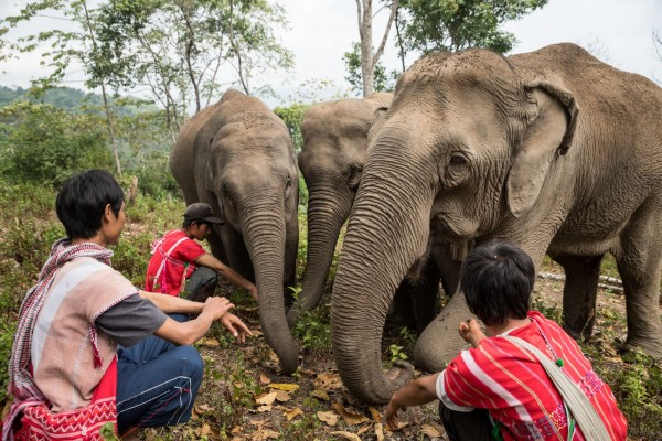 Three mahouts with three elephants in Thailand