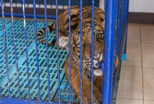 Beyond wet markets: the problems with the wildlife trade