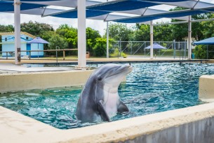 Dolphin in concrete tank at tourist attraction - World Animal Protection