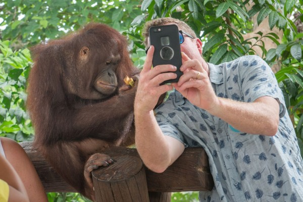 A tourist takes a selfie with a sloth in Brazil - Wildlife Selfie Code - World Animal Protection