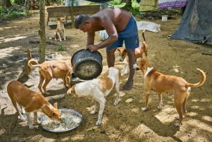 Helping thousands of animals after floods and landslides hit Sri Lanka