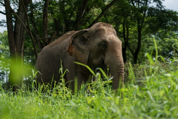Elephant and mahouts at higher welfare venue