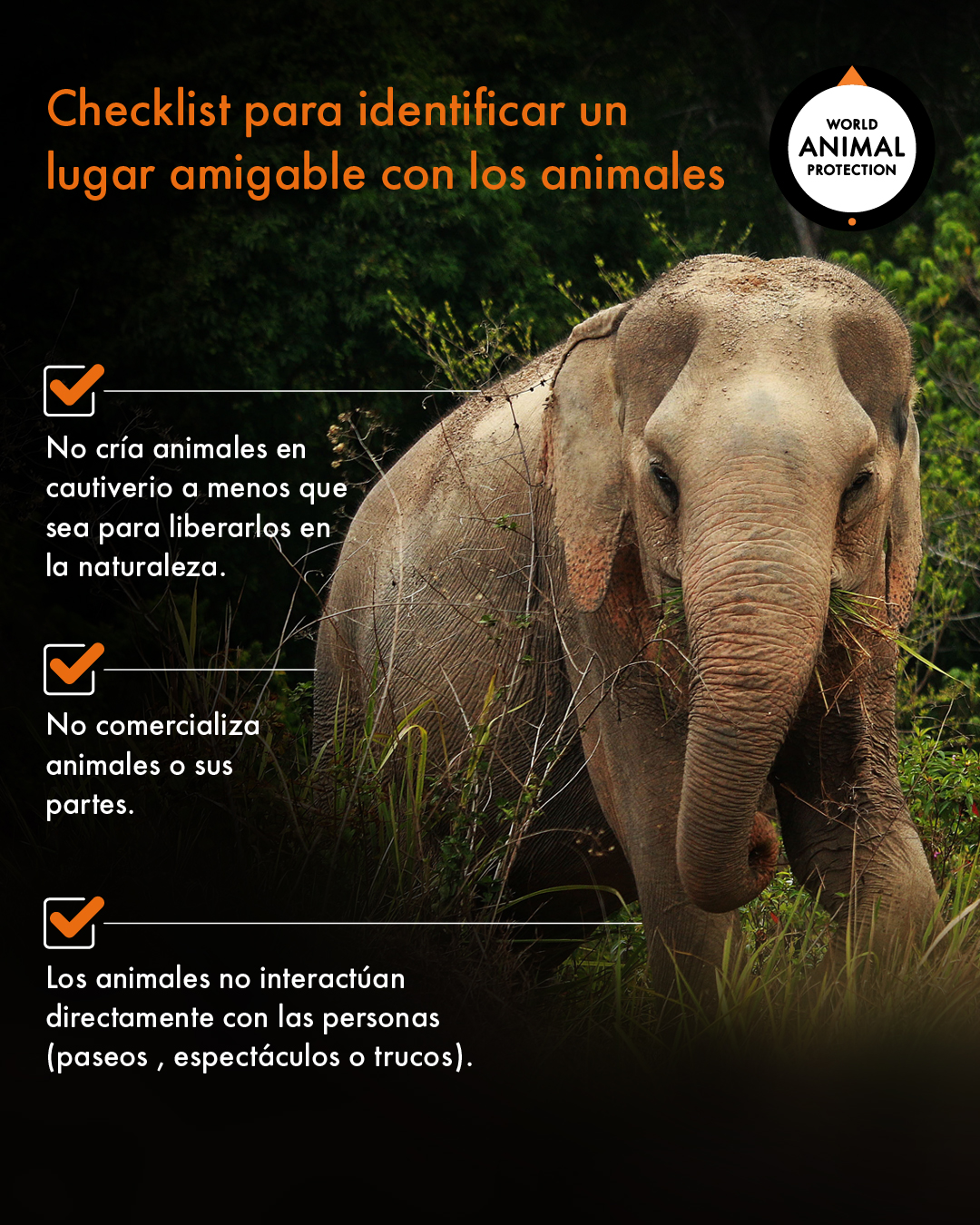 checklist lugar amigable con animales 01