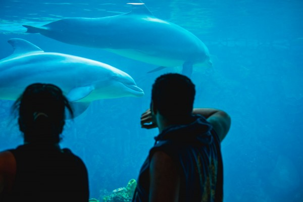 Tourists looking at captive dolphins at SeaWorld San Antonio, USA. Credit Line: World Animal Protection