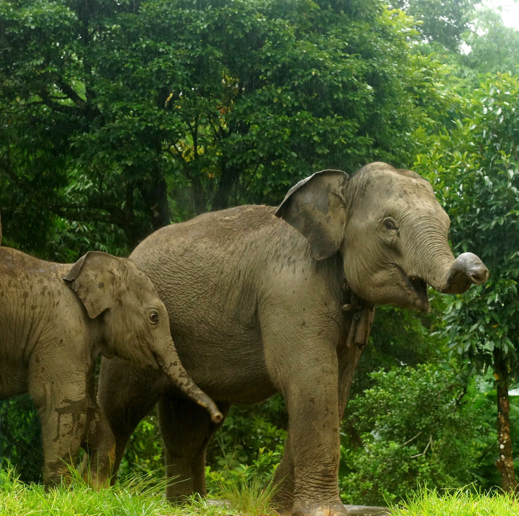 Elefanter i et af de reservater, vi giver ekstra støtte under coronakrisen