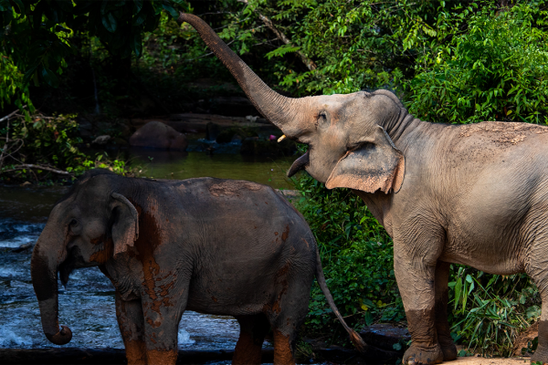 Two elephants by the river