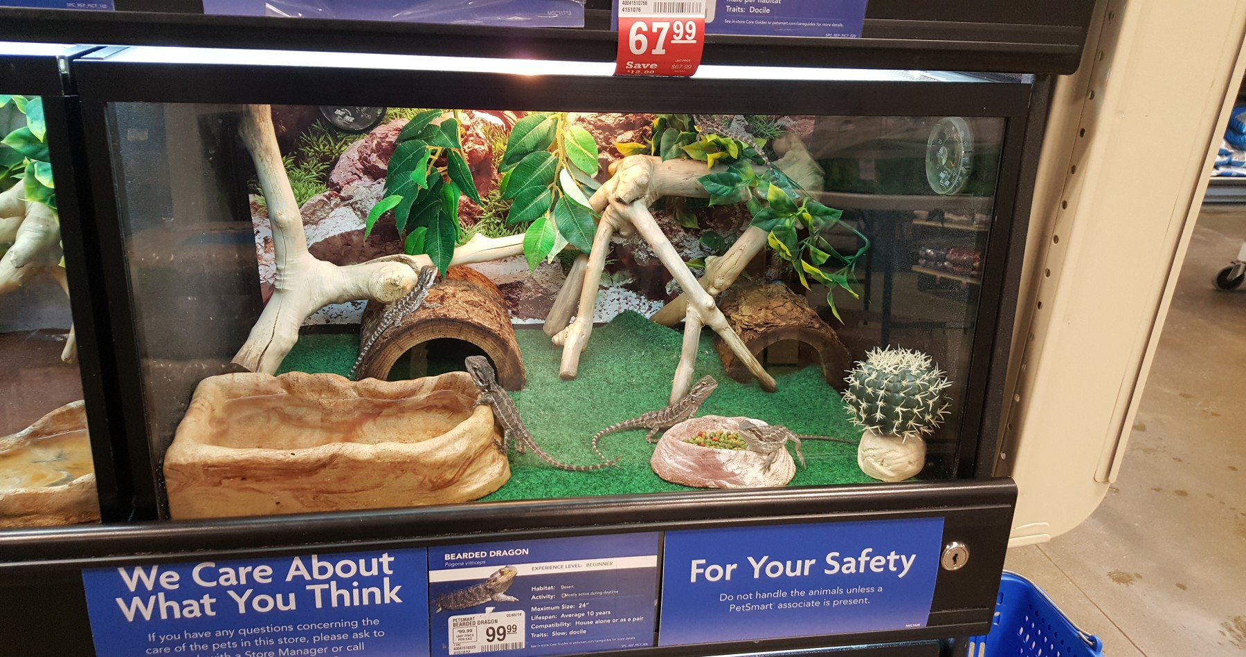 Pictured: A bearded dragon display at PetSmart labelled as a beginner pet.