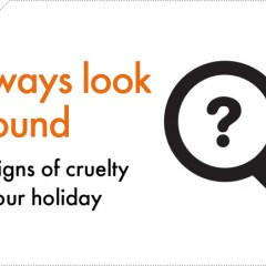 Image text: always look around for signs of cruelty on your holiday