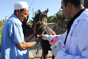 A World Animal Protection vet checks over a donkey