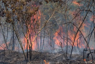 The Amazon rainforest burning 2019