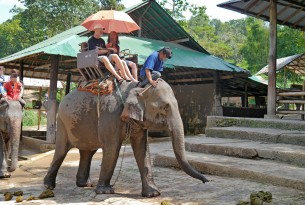 Elephant Rides and Shows – Five Myths