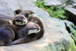 Otters, tortoises and other animals in the cruel exotic pet trade now have increased protection