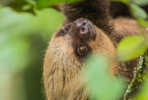 Costa Rica urges tourists not to take wildlife selfies