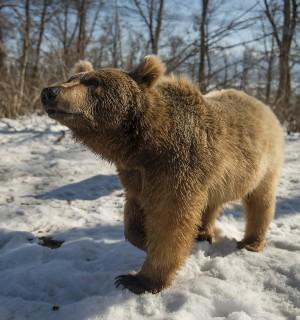 Bears at Zarnesti bear sanctuary