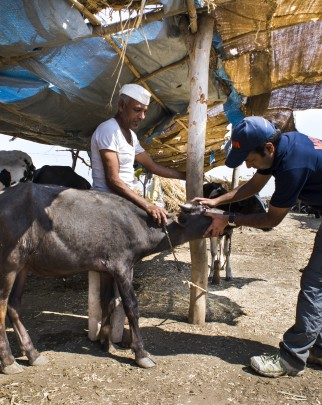 World Animal Protection vet treats calf in disaster area