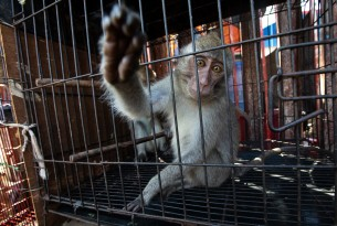 The wildlife trade