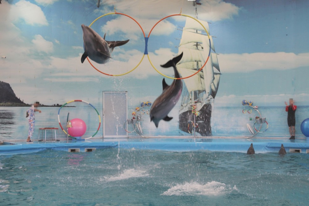 Dolphins performing - World Animal Protection