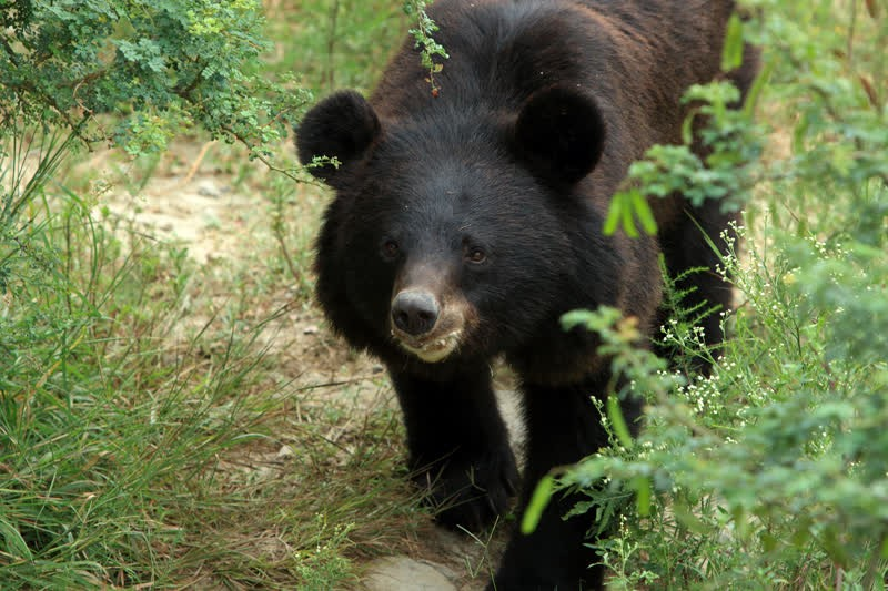 Rani the bear at Balkasar Sanctuary in Pakistan - World Animal Protection