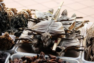 Bodies of Lizards dried for use in traditional medicine in a Chinese Pharmacy in Singapore - World Animal Protection