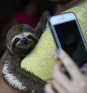 Sloth - Selfie Code - World Animal Protection