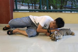 Tinder takes a stand against tiger selfies
