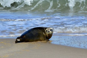 How plastic pollution is affecting seals and other marine life
