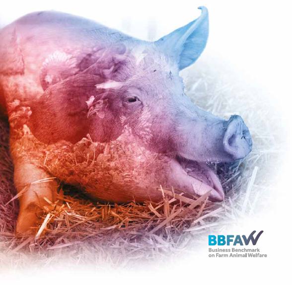 BBFAW_Cover_2019_image