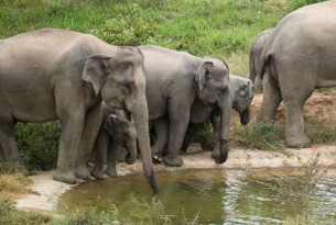 Elephants at Kui Buri National Park - World Animal Protection - Wildlife not entertainers