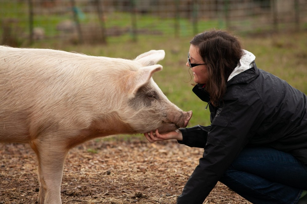 pig with human