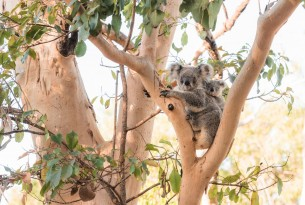 Urgent reform needed to protect Australian animals