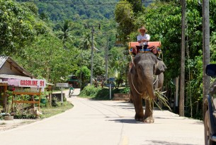 Elephant walking along a road in Thailand