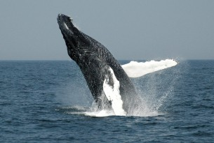 International Whaling Commission set to protect whales from ghost gear entanglement