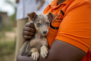 A staff o World Animal Protection holding a dog