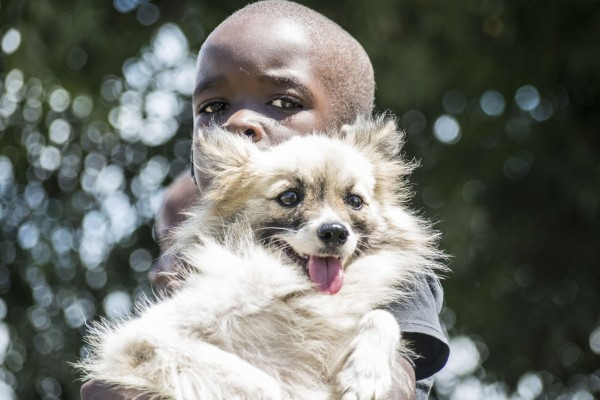 Dog at vaccination drive in Kenya - World Animal Protection - Better Lives For Dogs