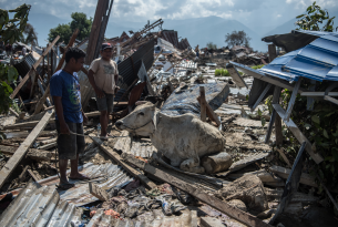 People try to move a cow as it sits in the rubble of destroyed buildings following an earthquake, 2018 in Palu, Indonesia