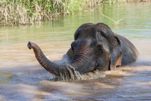 Lotus the elephant takes a bath at the Boon Lott's Elephant Sanctuary in Thailand