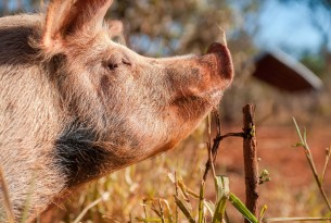 Success! Animal sentience to be recognised in UK law