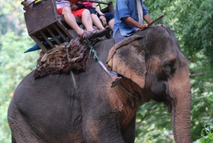 Tourists take a ride on an elephant in Thailand