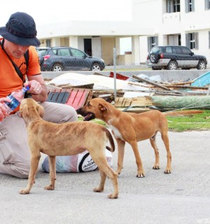 International Disaster Response Manager Steven Clegg helps dogs affected by the hurricane