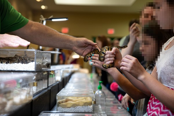 Ball pythons at an exotic pet expo - photo by Aaron Gekoiski for World Animal Protection
